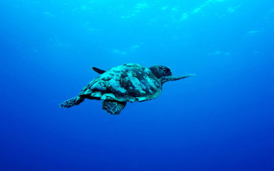 Effects of Ocean Pollution on Marine Life and Humans